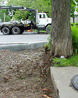 Infrastructure work takes a toll on street trees over the course of their lifetime!