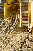 Modified bulldozers lift dormant bare root trees out of the ground and lay them on the soil surface to be collected.