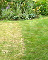 Mowing consistently at three inches, right, always results in a more attractive lawn as compared to mowing at two inches, at left.