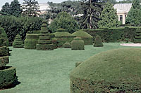 The topiary garden at Longwood Gardens offers an example of how formally yews can be pruned.