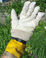 A cotton glove worn over a rubber glove can serve as a weed killer applicator.
