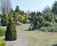 The Heartland Collection of Garden Conifers at the Bickelhaup Arboretum in Clinton, Iowa contains more than 600 varieties of coniferous evergreens.