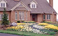 A river of spring-flowering bulbs leads the eye to the front door of this Town of Manlius residence.