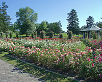 June 15th is about peak bloom at the E.M. Mills Rose Garden in Syracuse.